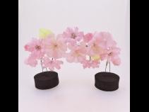 ミニフラワー桜(ピンク)