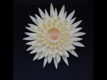 舞子かんざし菊(コーム) 乳白色